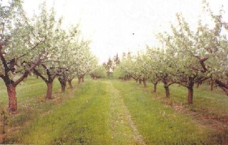 Tinkamai genimas ir prižiūrimas senas, tradicinis sodas